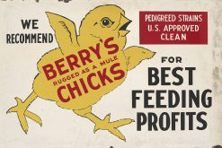 Berrys Chicks 27x18 1