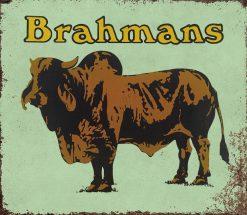 Brahmans 31x27 1